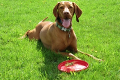 Frisbee Time