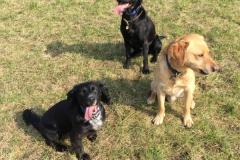 Wax, Bella & Tomas